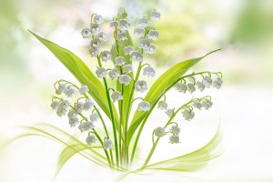 Lily of the valley by 1x