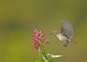 Sunbird by 1x