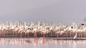 Flamingos by Aniket Wasnik