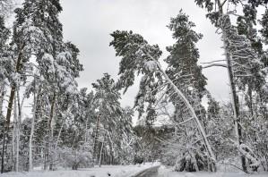 Trees Are High by Ann Romanenko