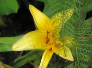Yellow Flower-2 by Arizona Photos by Jym