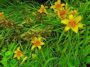 Yellow Flower-1 by Arizona Photos by Jym