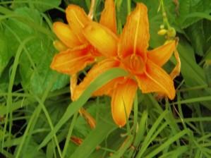 Oranger Lilly 2 by Arizona Photos by Jym