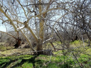 another narley old tree by Arizona Photos by Jym
