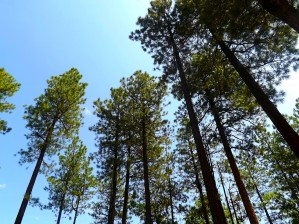 Blue Sky by Arizona Photos by Jym
