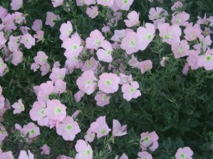 Flower Garden 2 by Arizona Photos by Jym