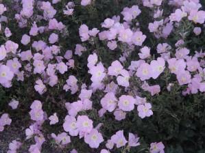 Flower Garden by Arizona Photos by Jym