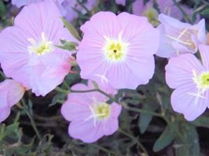 Flowers by Arizona Photos by Jym