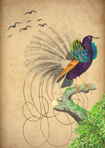 Long Tailed Bird by Ashira Designs