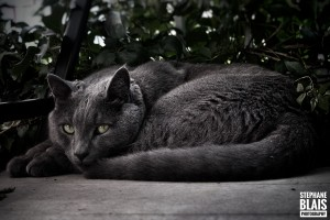 Charlie the Cat by BLAIS Photo
