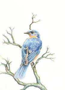 Robin wc 2021 by Brandi Blackwood Lowe