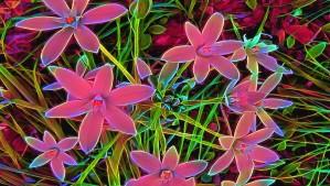 radiantplant