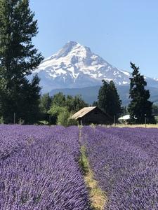 Mt. Hood Oregon by Christina Stephan