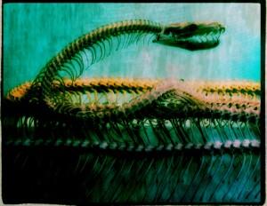 Anaconda by D de G