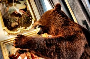 Bear by D de G
