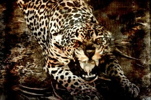 Jaguar Guyana by D de G