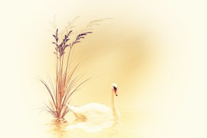 White Swan by Dagmar Marina