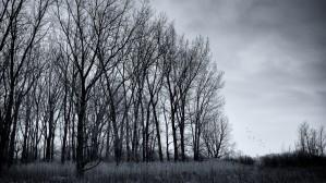 Mauvais présages by Daniel Thibault artiste-photographe