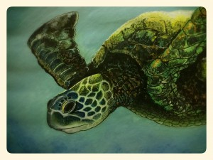 Turtle by Dayalan Oviyan