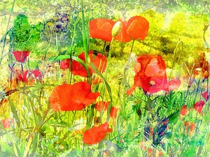 Just A Hint Of Red Poppies by Dorothy Berry-Lound