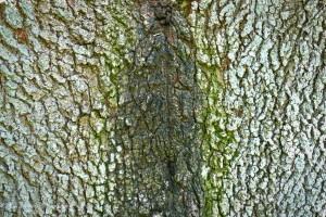 tree bark and its colors by Ed Bravo