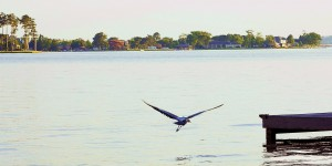 Coming in for a Landing  by Ellen Barron O-Reilly
