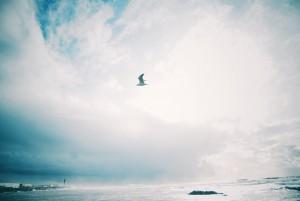 Freedom by Elsa