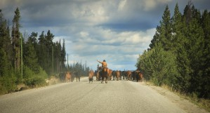 Chilcotin Traffic by Forgotten British Columbia