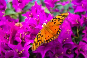 Butterfly by Gilda Costilla