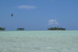 French Polynesia - Rangiroa Blue lagoon view 1 by GlobetrotterDB