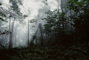 Forest Fog by Greene Safaris Productions