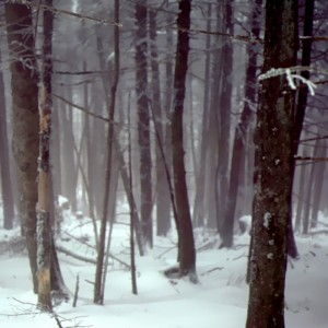 Mists of Snow by Greene Safaris Productions