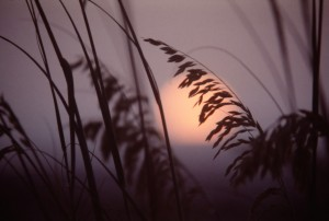 Reed Sunset by Greene Safaris Productions