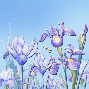 Bearded Iris Garden by HH Photography of Florida