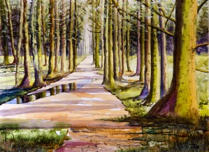 Woodland Glade  by Wall Art Unlimited
