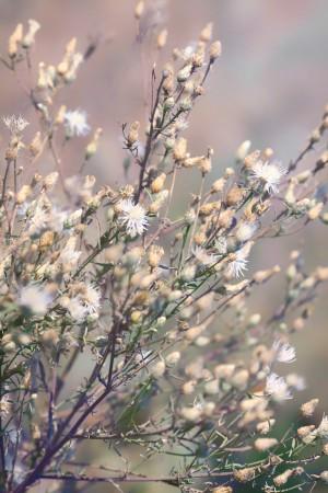 Wild Grass by Ira Silence