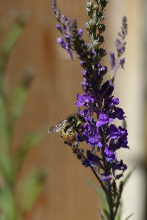Bee Love by J  Jasmyn Phillips
