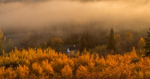 Edworthy Foggy Autumn Morning by Jane Dobbs