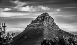 LionsHeadBW by Jane Dobbs