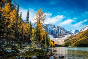 Taylor Lake, Alberta by Jane Dobbs