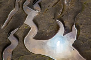 Tide Pool Bas Relief by John Foster