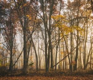 Morning Light by Joshua Farewell