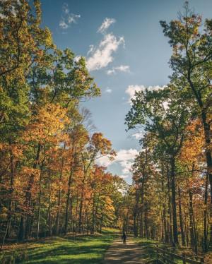 Walking through Autumn by Joshua Farewell
