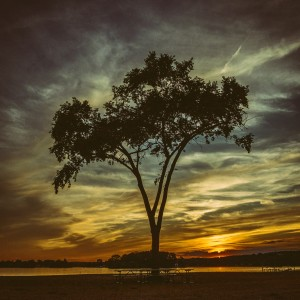 In Silhouette by Joshua Farewell