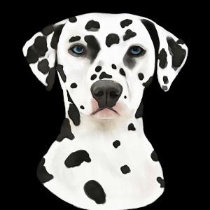 Dalmatian, by KJHArt