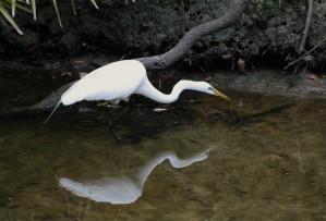 great egret2 by LK Glickman