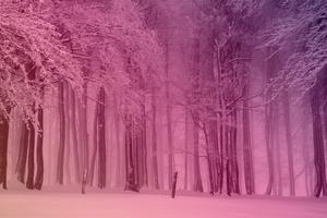 Warm Winter Snowy Forest by Le Monde Wall Art