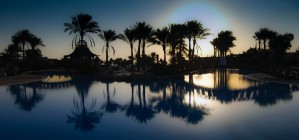 Palm tree swimming Pool by Leighton Collins