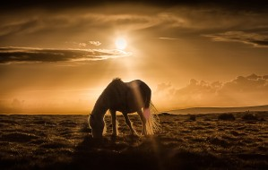 Gower pony at sunset on Cefn Bryn Gower by Leighton Collins