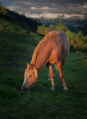 Horse at sunset by Leighton Collins